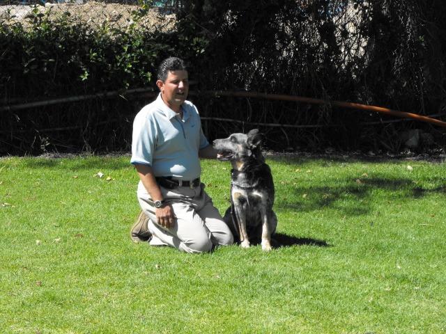 Obediencia Canina | Cuautitlán Izcalli | Mundo Kanino