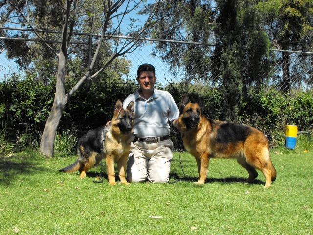 Escuela de Obediencia Canina | Cuautitlán Izcalli | Mundo Kanino